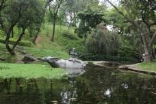 春天湖面上吹笛放牛的牧童唯美拍摄