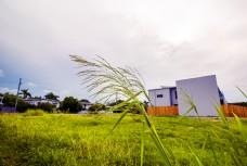 房屋草地背景下的绿草