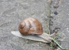 兔子动态4k图片素材蜗牛小图片吃草的壁纸动物图片