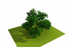 绿色植物大树