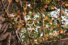 树上的星星灯商用摄影