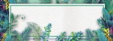 夏季清新植物花朵海报banner