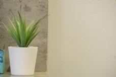 盆栽绿植装饰背景摄影
