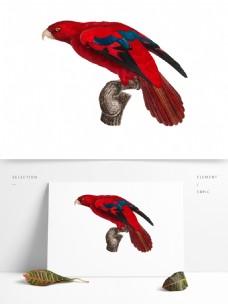 鸟类鹦鹉手绘矢量彩色红色元素