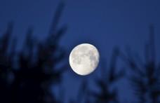 树梢上的月亮