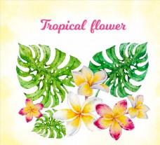 彩绘热带龟背竹叶和鸡蛋花