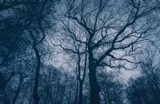 森林阴森夜晚植黑夜物图片素材