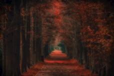 秋天上海宝山滨江森林公园