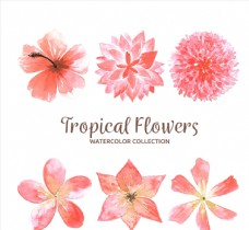 水彩绘粉色热带花卉