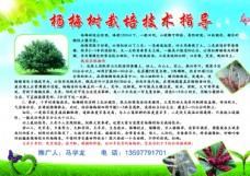摇钱树 杨梅 农业 展板 绿色