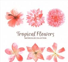 6款水彩绘粉色热带花卉