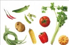 手绘矢量蔬菜素材