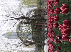 花 花蕊 红色的花 公园 花园