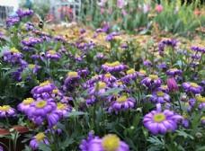 花 花蕊 紫色的花 公园 花园