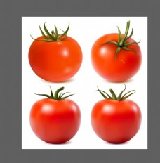 西红柿插画
