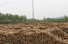 木头  辐射松   货场