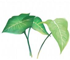 叶子热带植物
