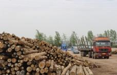 木头  辐射松   木头