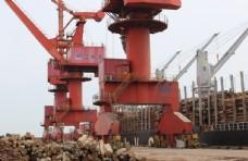 木头  辐射松   港口