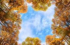 秋季树木天空