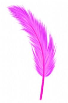 一根紫色羽毛