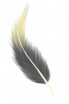 灰色鸟儿羽毛