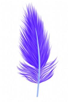 漂亮蓝色羽毛