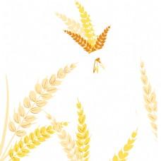 金黄的麦穗