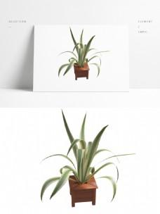 室内兰花小型盆栽