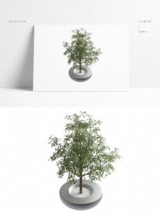 植物小树室内盆景