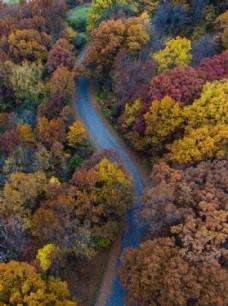 秋日林间小路