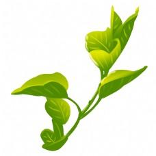 新芽嫩叶茶叶