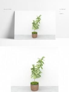 现代简约绿植场景