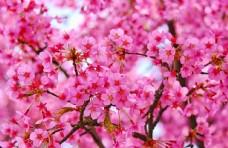 梅花图片植物图片图片自然风景
