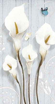 白色花朵马蹄莲玄关背景