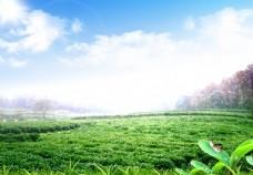 藍天白云草地