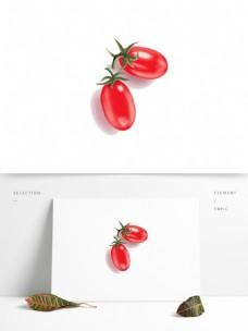 手绘水果圣女果矢量图