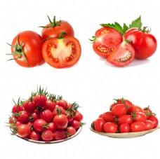 西红柿 圣女果 千禧
