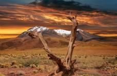 大自然沙漠图片枯树图片创意