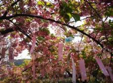 樱花与风铃