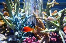 海洋馆热带生物