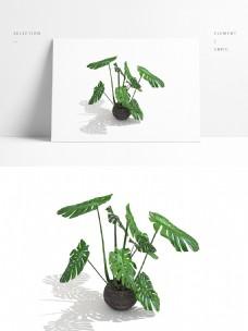 通用室内盆栽模型