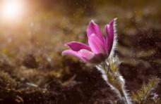 海葵图片绿色植物图片自然风光