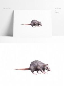 写实老鼠带贴图png图