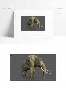 写实动物模型大象带贴图矢量图