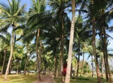 三亚椰林风景