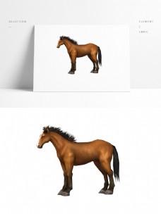 写实马模型png空底图