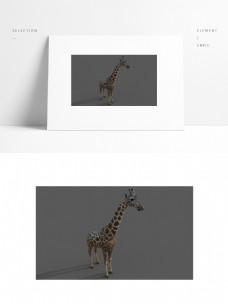 写实长颈鹿模型带贴图