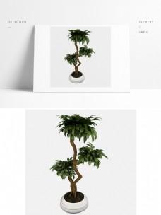 精细植物树木模型