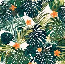 鸡蛋花热带植物